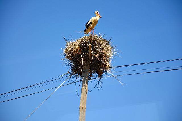 """""""鳥</p"""